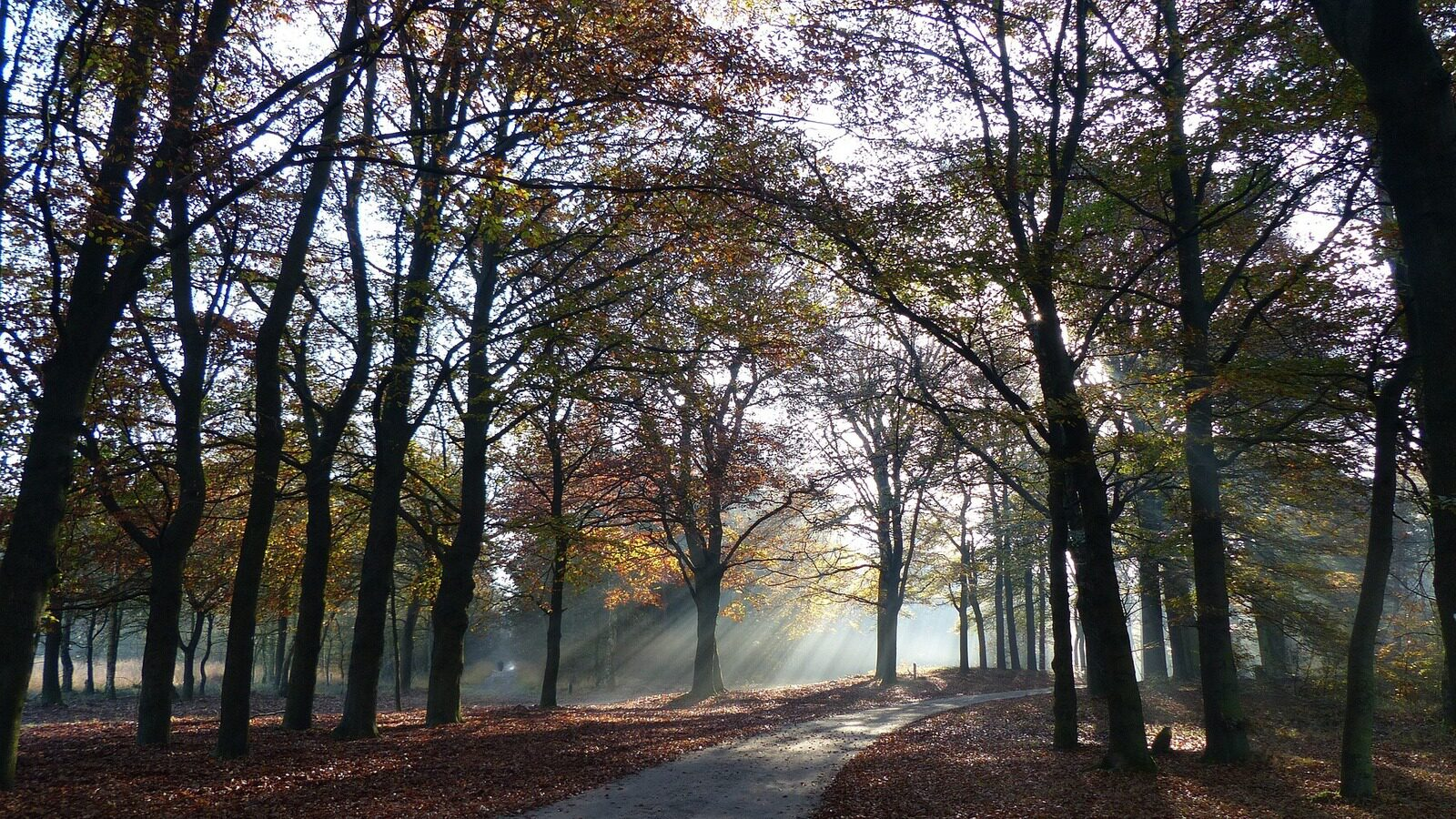 Veluwe autumn discount