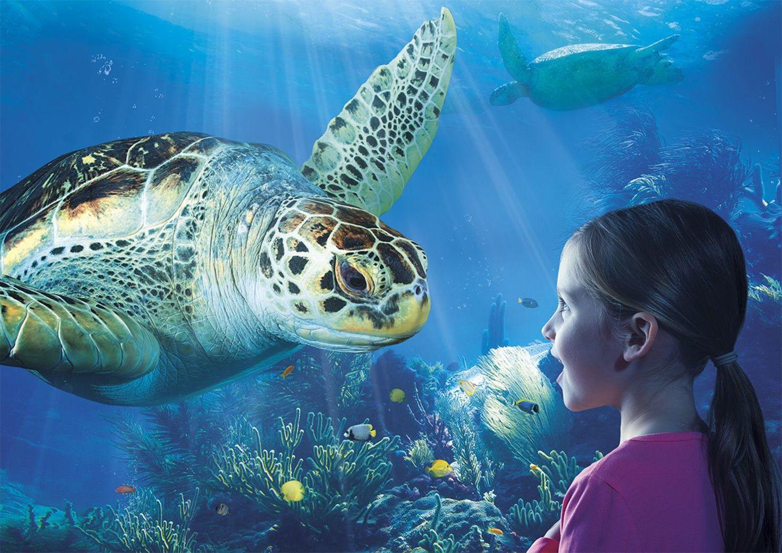 Sea Life Arrangement Jabbeke