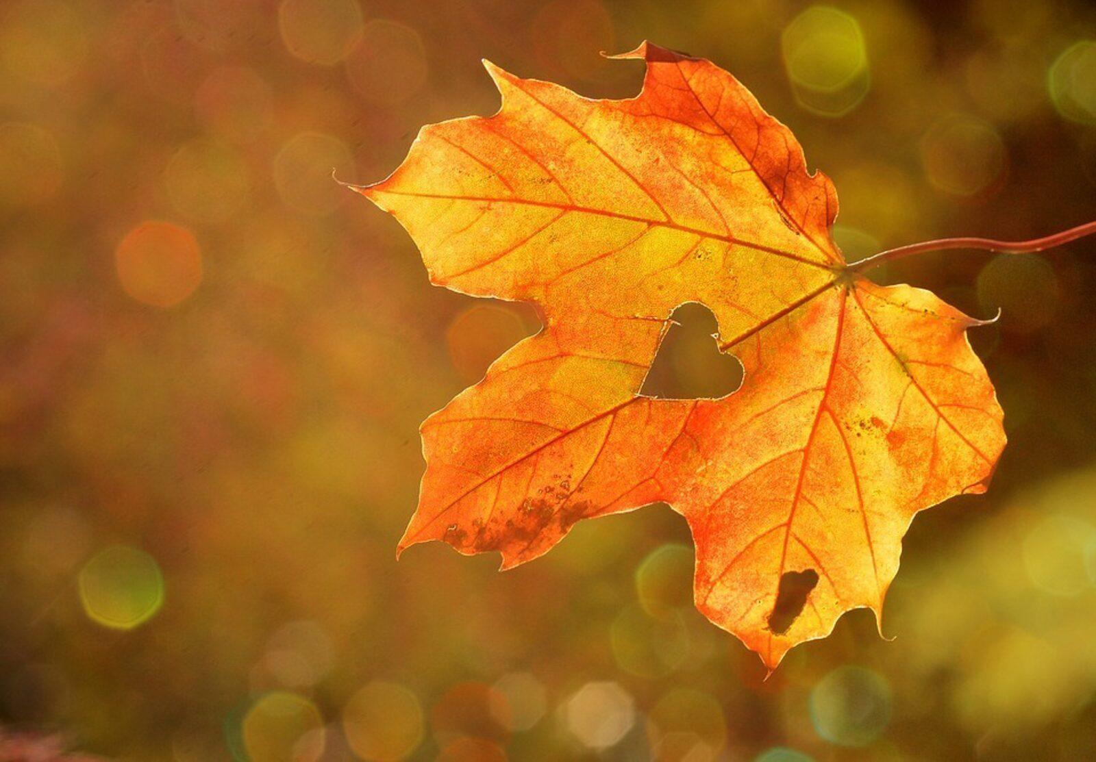 Week Autumn holiday