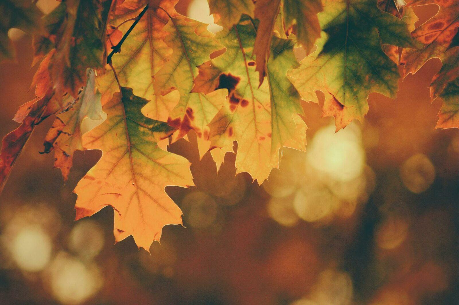 Herbstwoche 2021