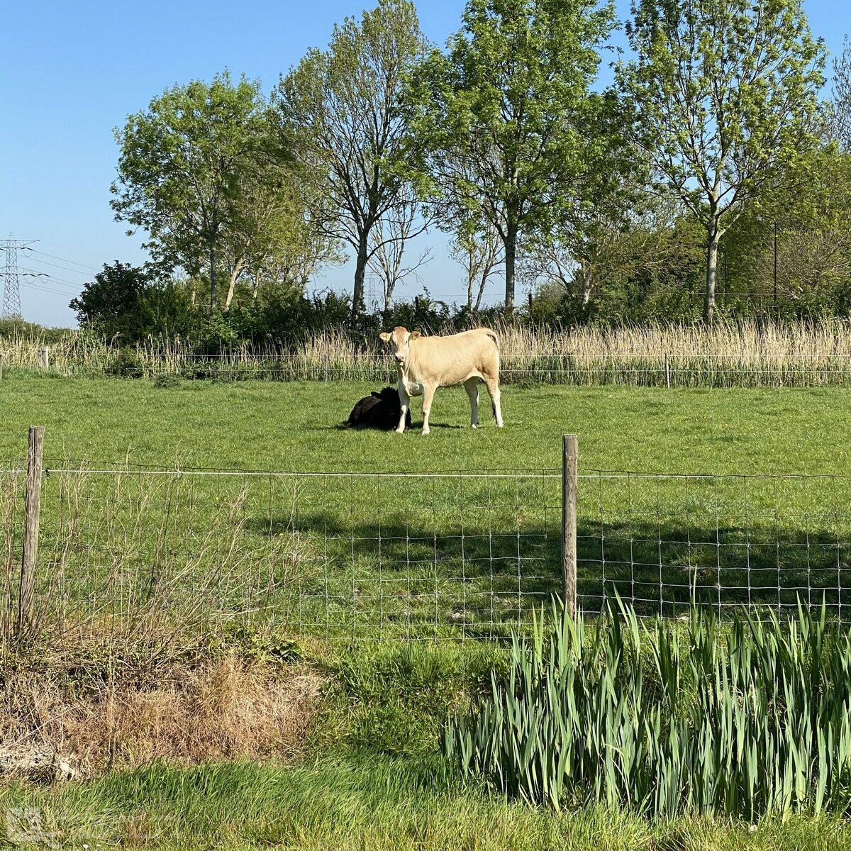 VZ736 Vakantiehuis Ellewoutsdijk
