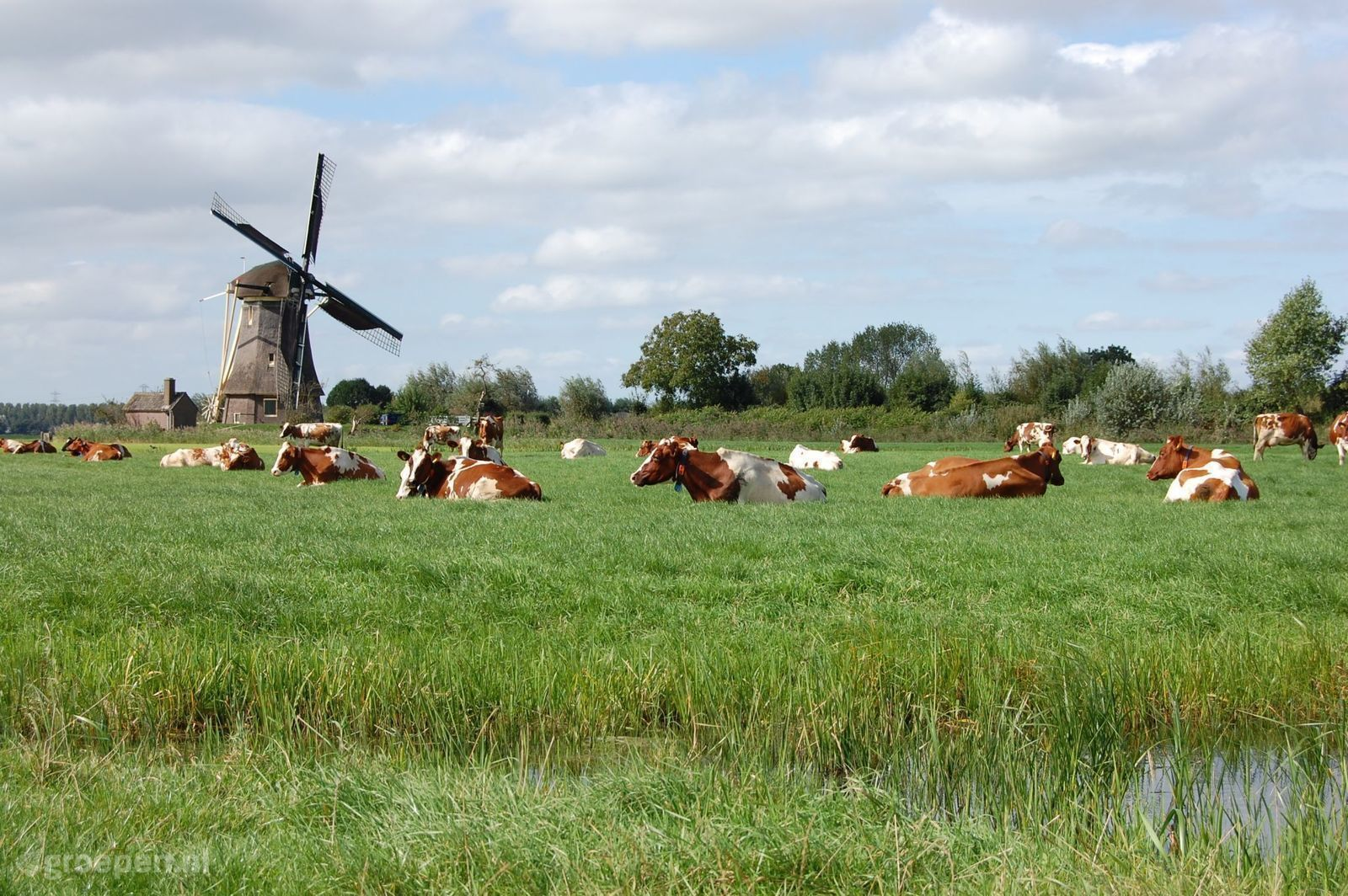 Vakantieboerderij Vreeland