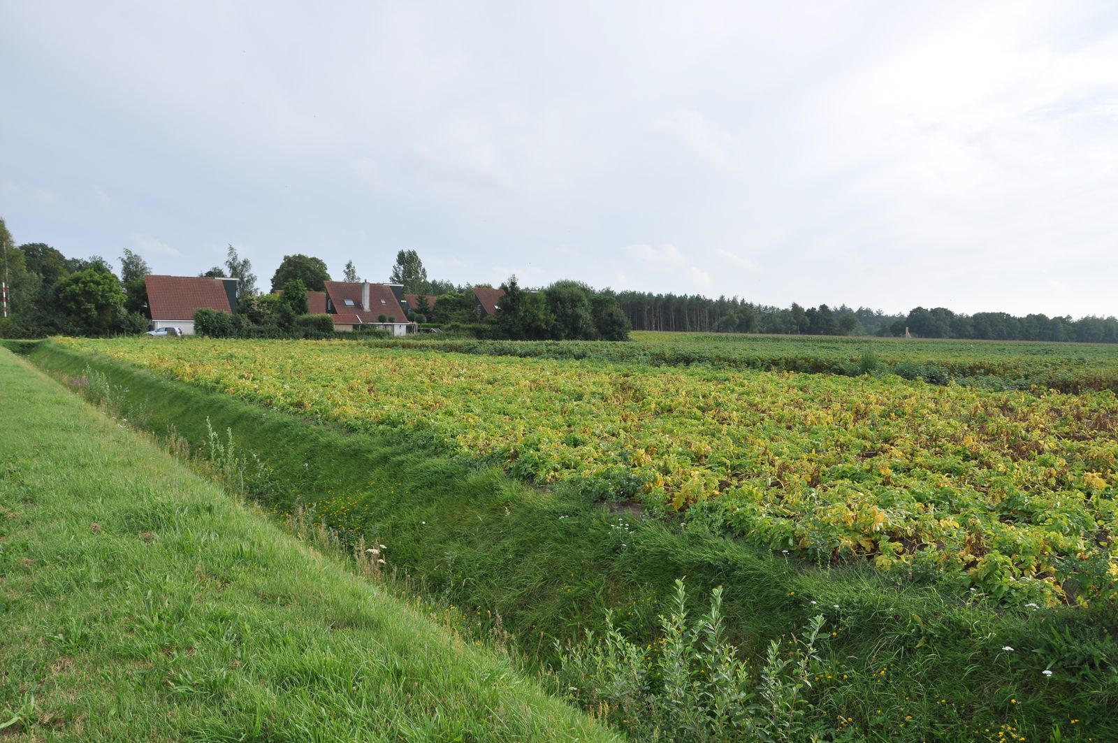 07 de Leonberger