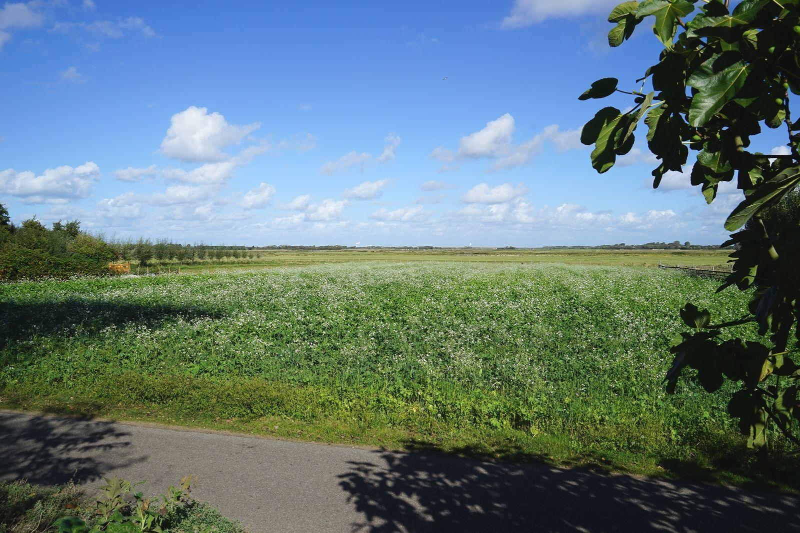 Loevesteijn - Ouddorp