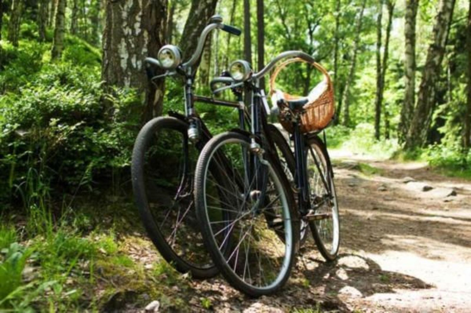 Discover the Maashorst nature reserve by bike