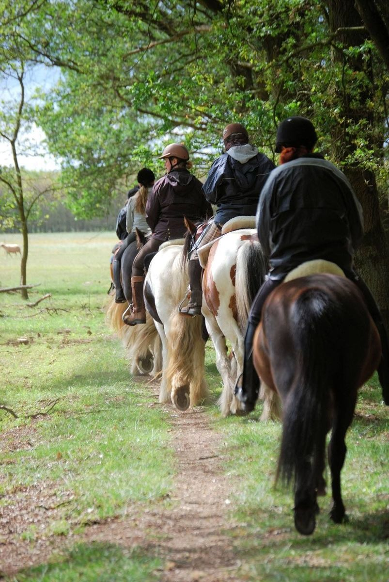 Discover the Maashorst nature reserve with your horse